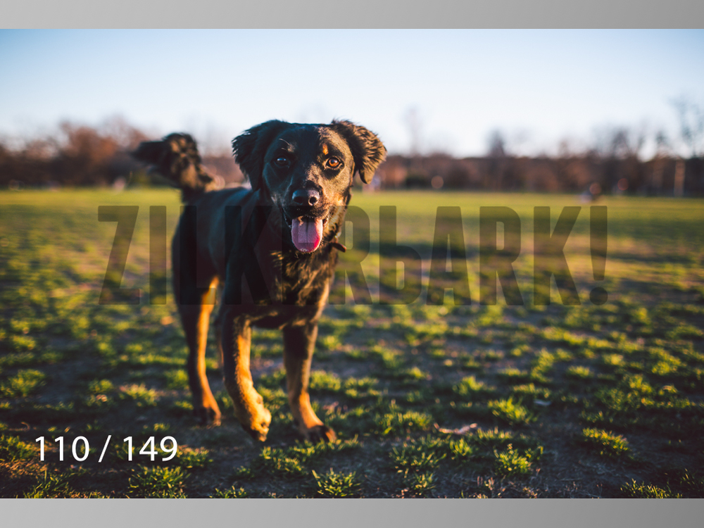 January Web All Dogs 2-110.jpg
