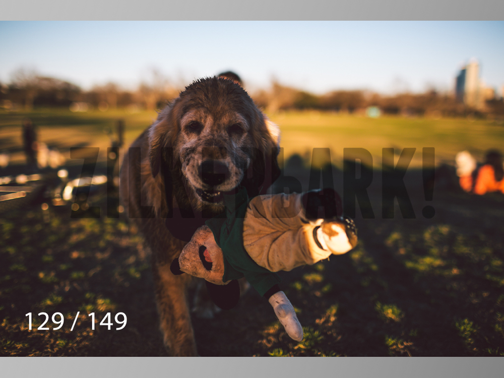 January Web All Dogs 2-129.jpg