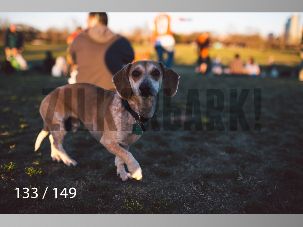 January Web All Dogs 2-133.jpg