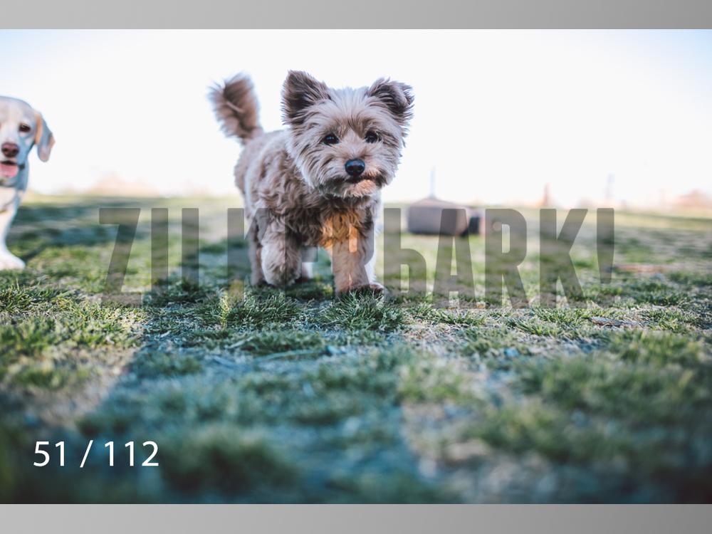 Dog Shoots-051.jpg
