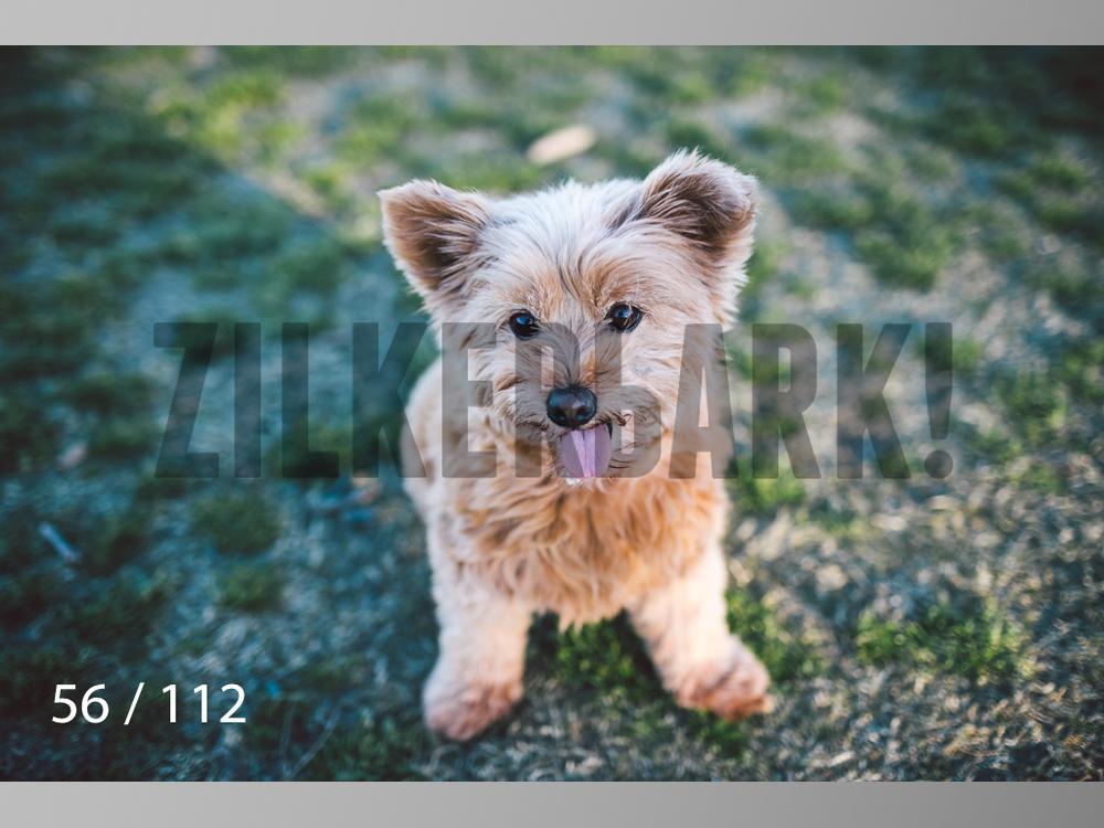 Dog Shoots-056.jpg