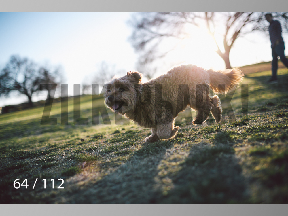 Dog Shoots-064.jpg