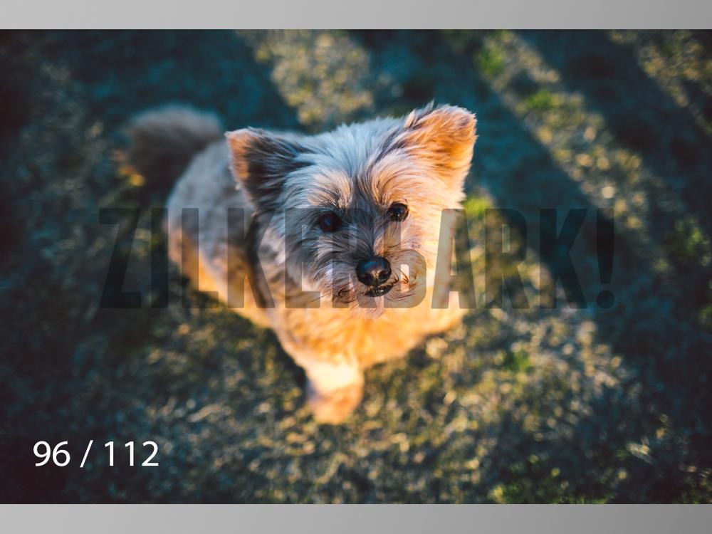 Dog Shoots-096.jpg