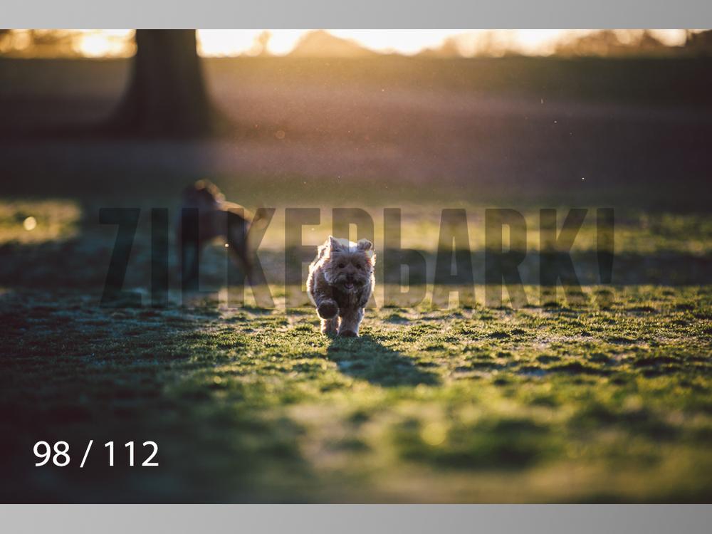 Dog Shoots-098.jpg