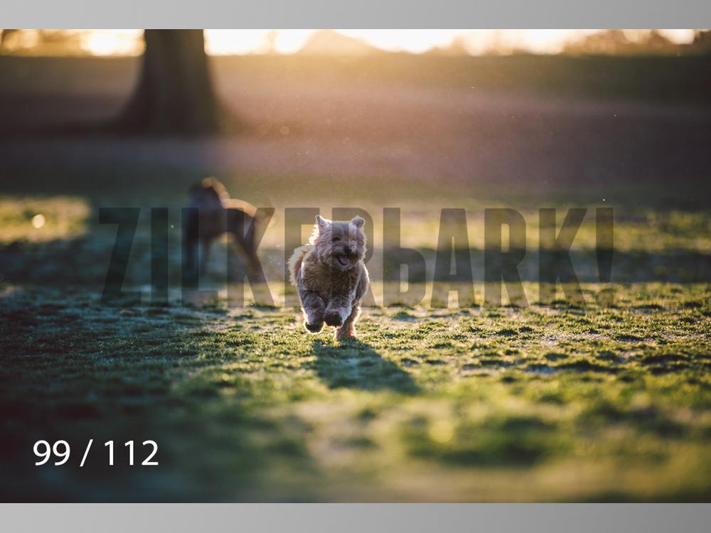 Dog Shoots-099.jpg
