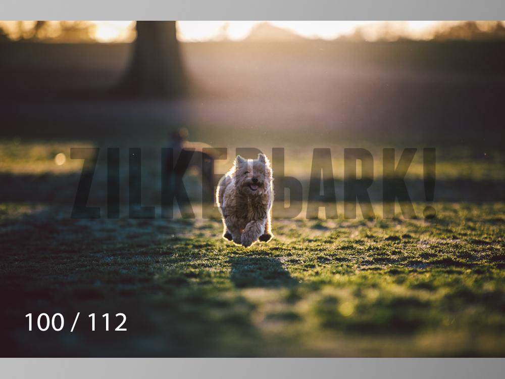 Dog Shoots-100.jpg