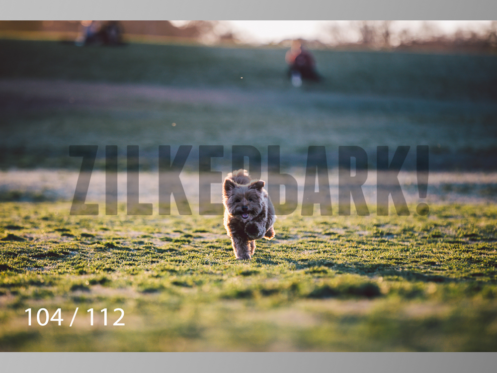 Dog Shoots-104.jpg