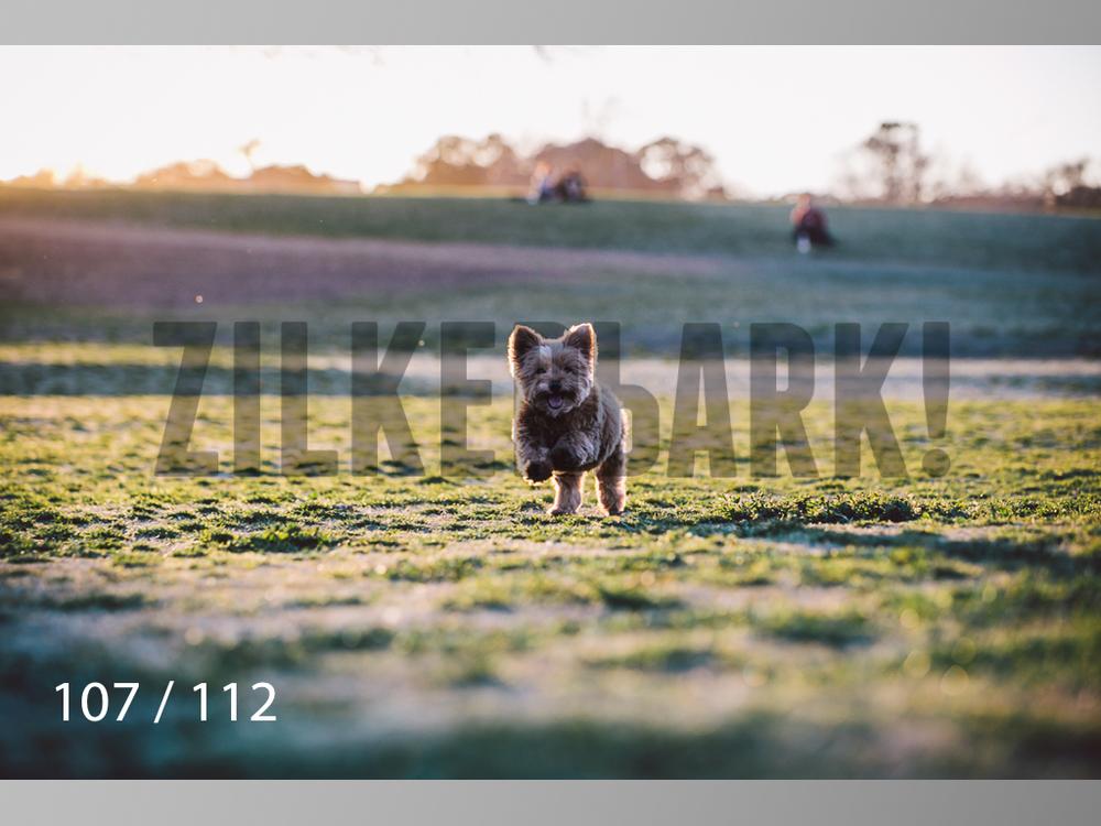 Dog Shoots-107.jpg