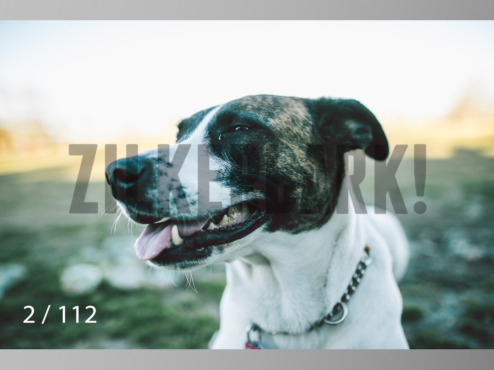 Dog Shoots-002.jpg