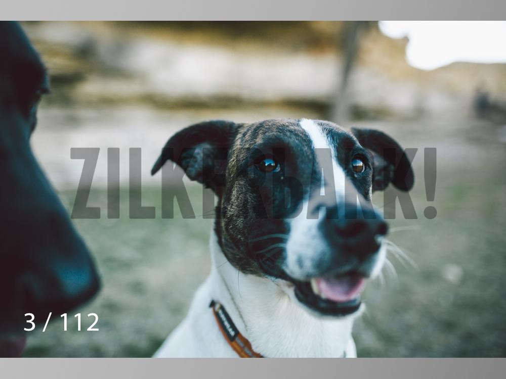 Dog Shoots-003.jpg