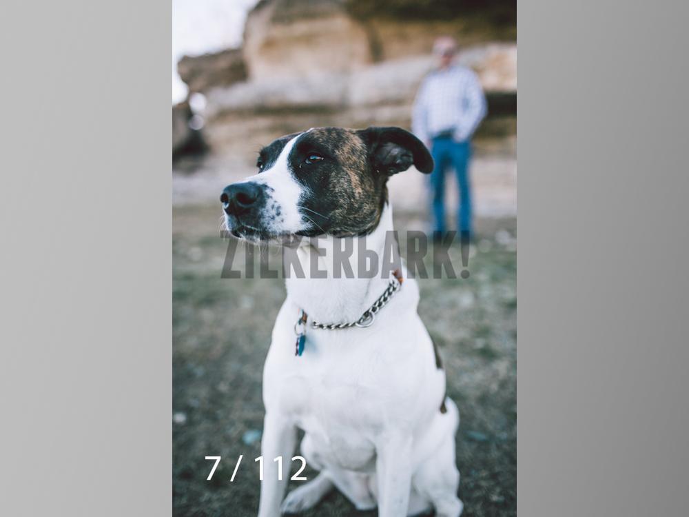Dog Shoots-007.jpg