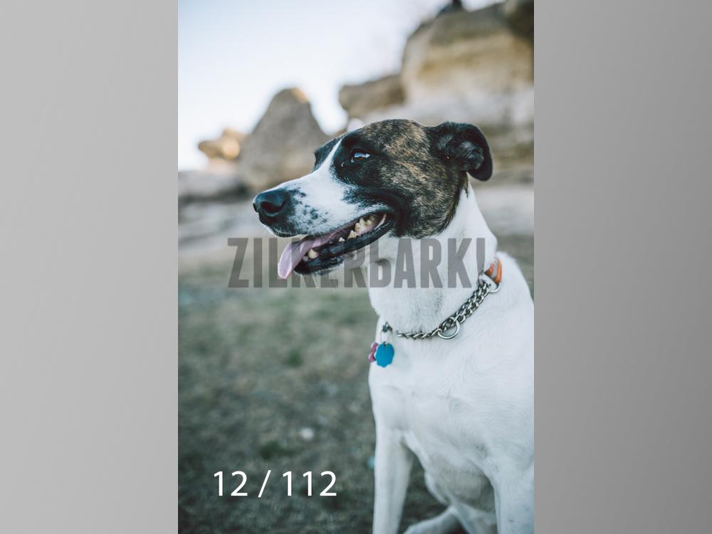 Dog Shoots-012.jpg
