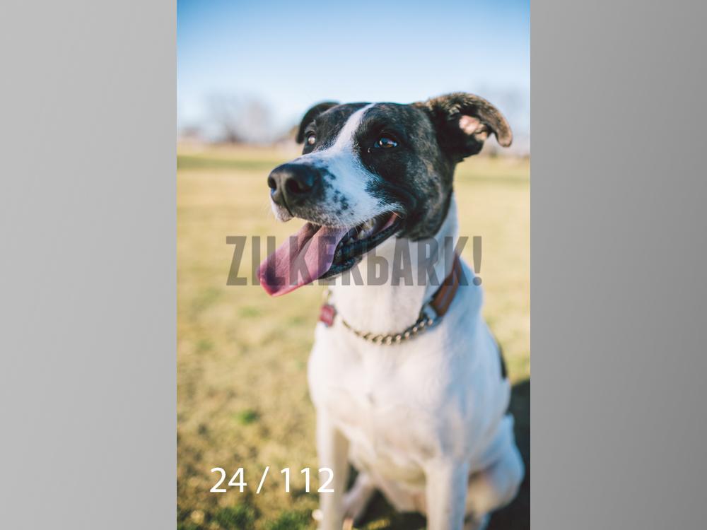 Dog Shoots-024.jpg