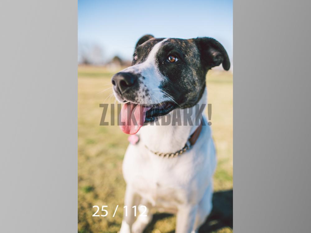 Dog Shoots-025.jpg