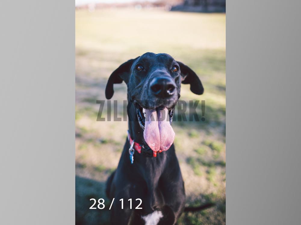 Dog Shoots-028.jpg