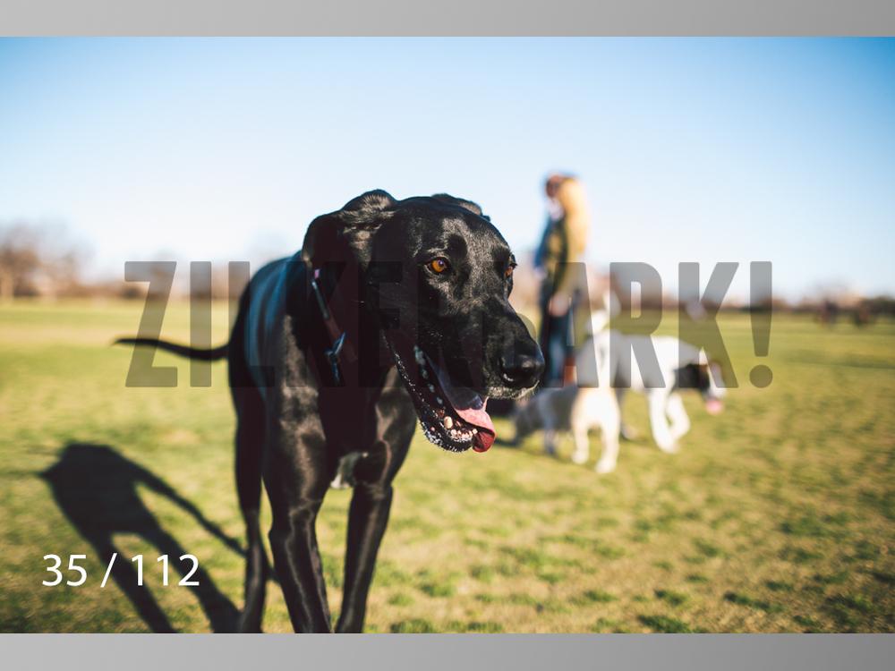 Dog Shoots-035.jpg