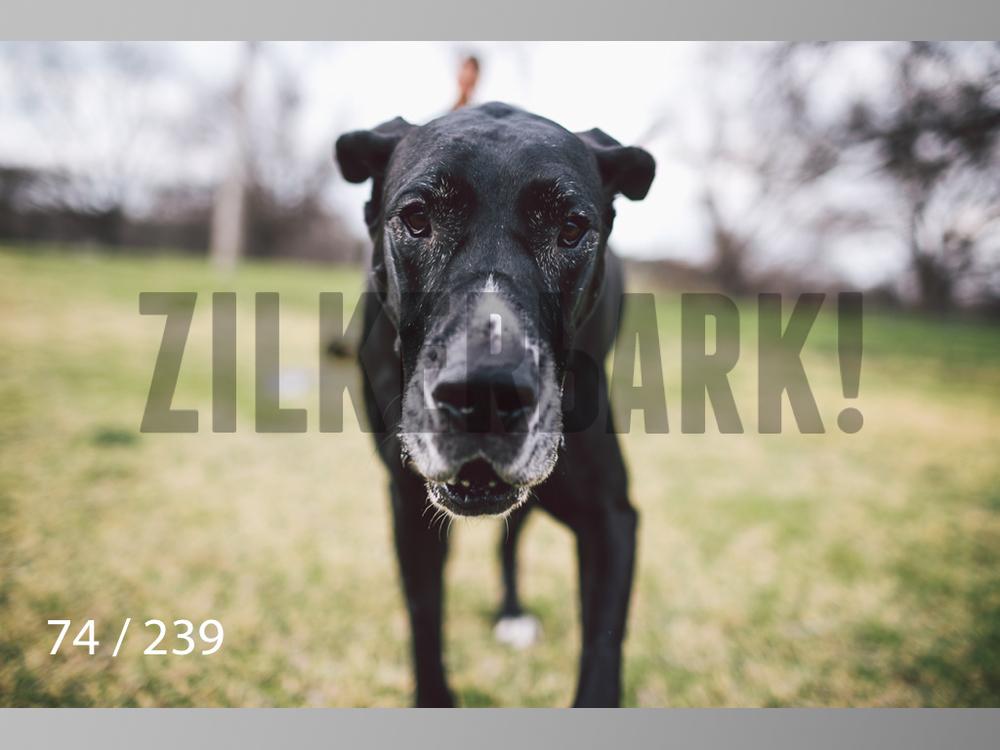 2.20 Dogs-074.jpg