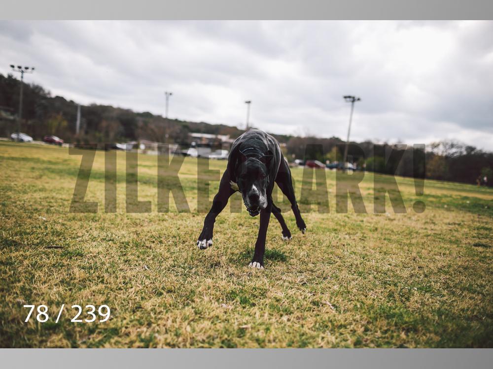2.20 Dogs-078.jpg