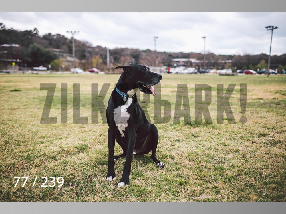 2.20 Dogs-077.jpg