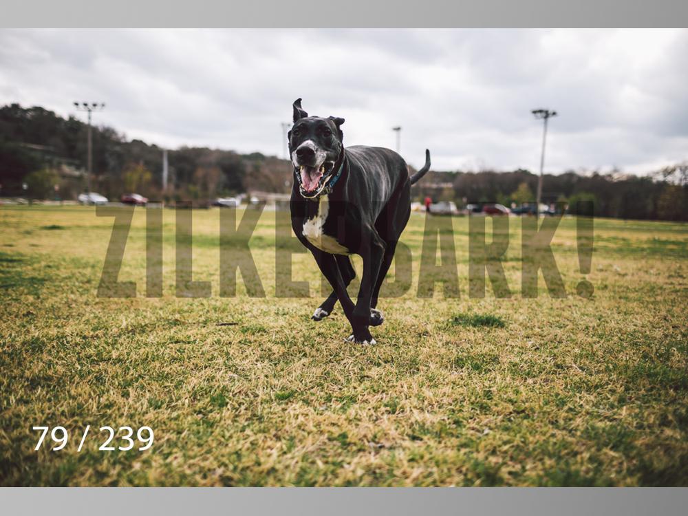 2.20 Dogs-079.jpg