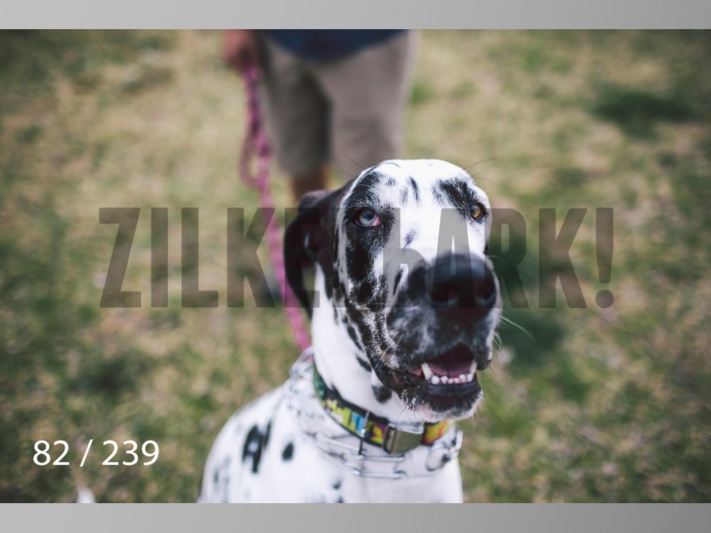 2.20 Dogs-082.jpg
