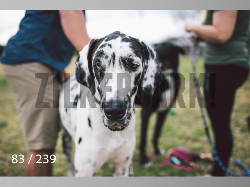 2.20 Dogs-083.jpg