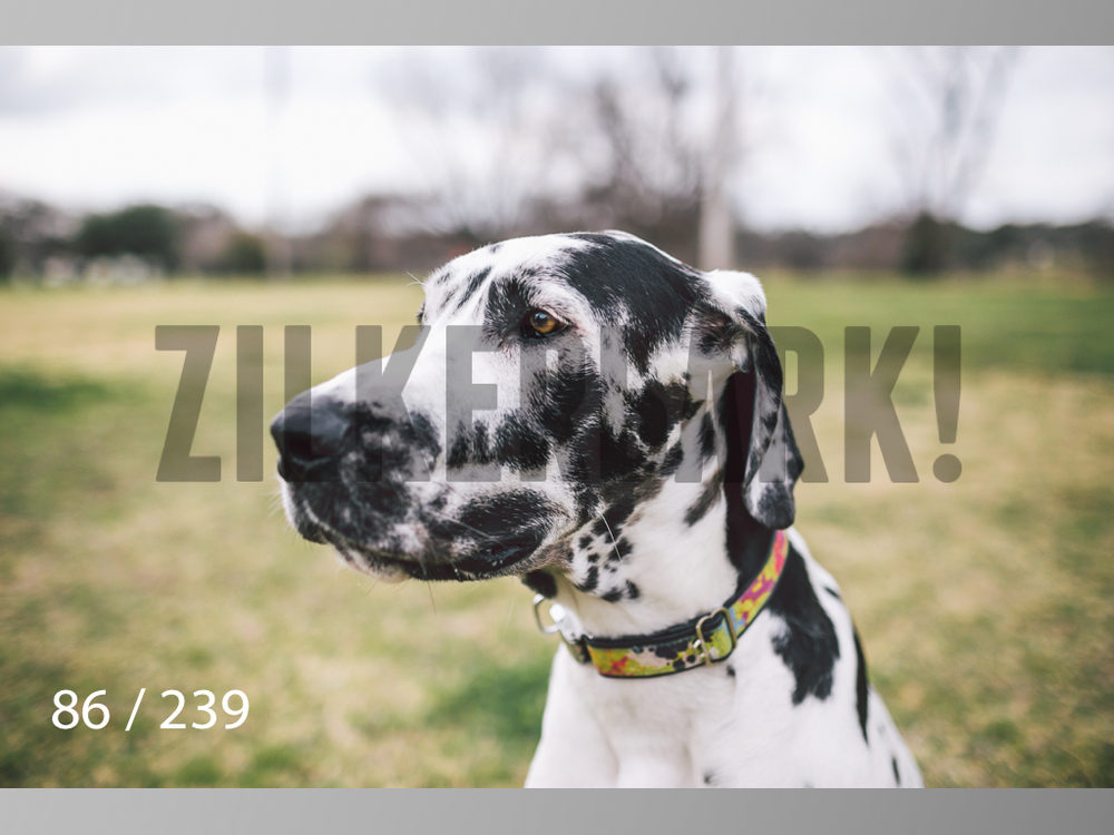 2.20 Dogs-086.jpg