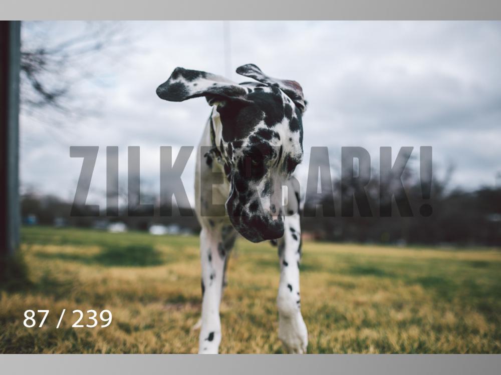 2.20 Dogs-087.jpg
