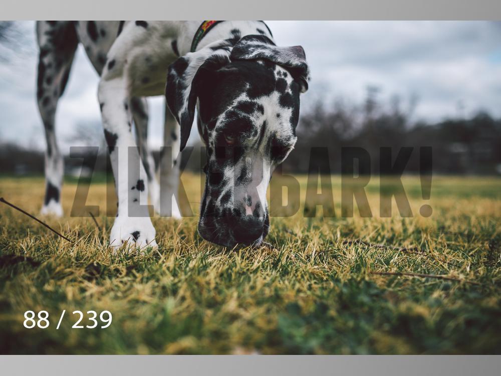 2.20 Dogs-088.jpg