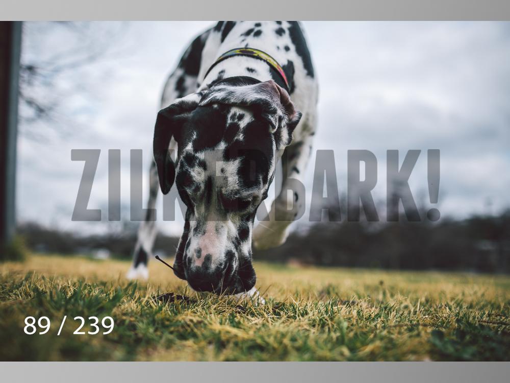 2.20 Dogs-089.jpg