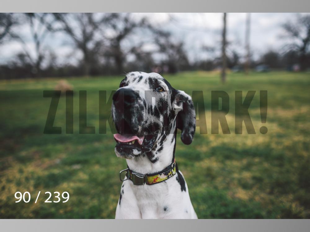 2.20 Dogs-090.jpg