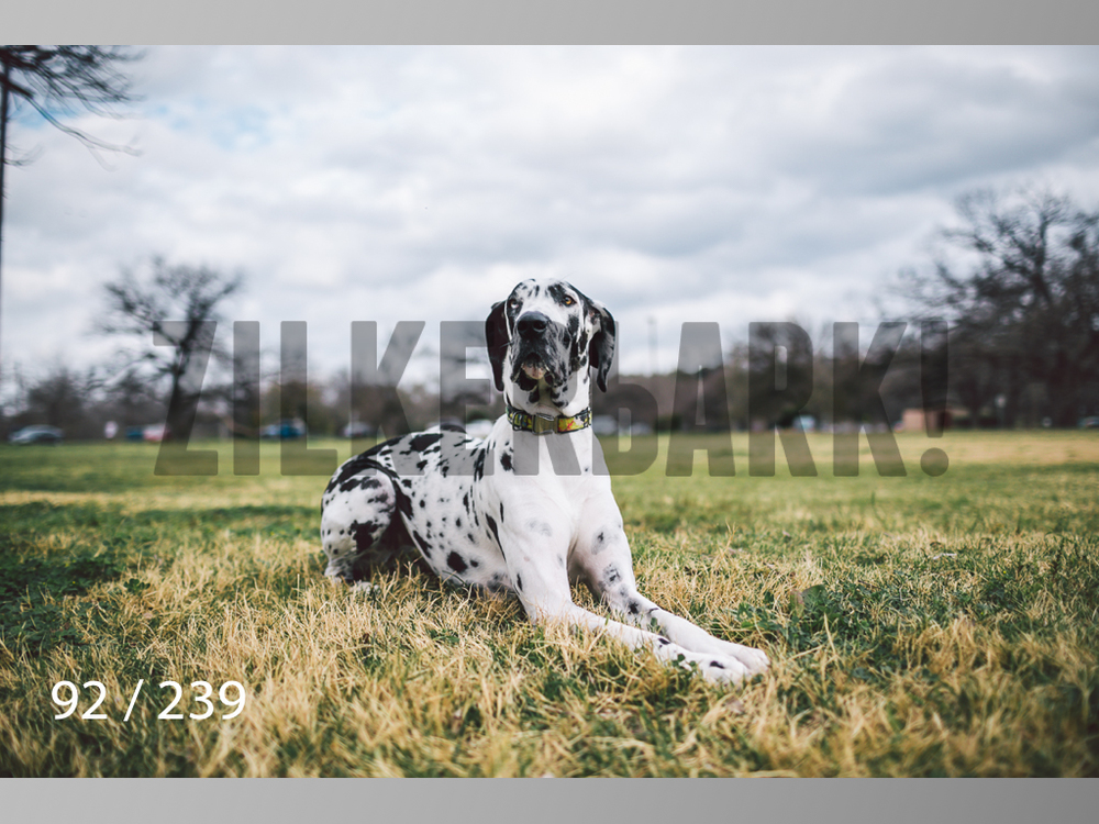2.20 Dogs-092.jpg