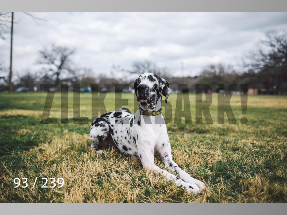 2.20 Dogs-093.jpg
