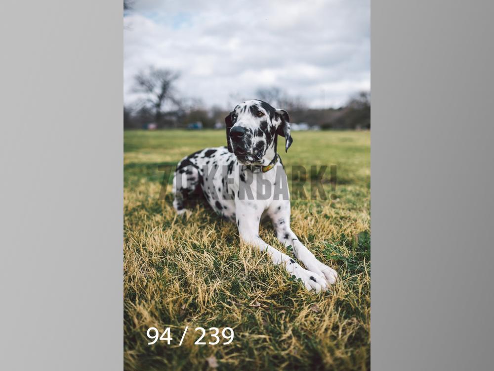 2.20 Dogs-094.jpg