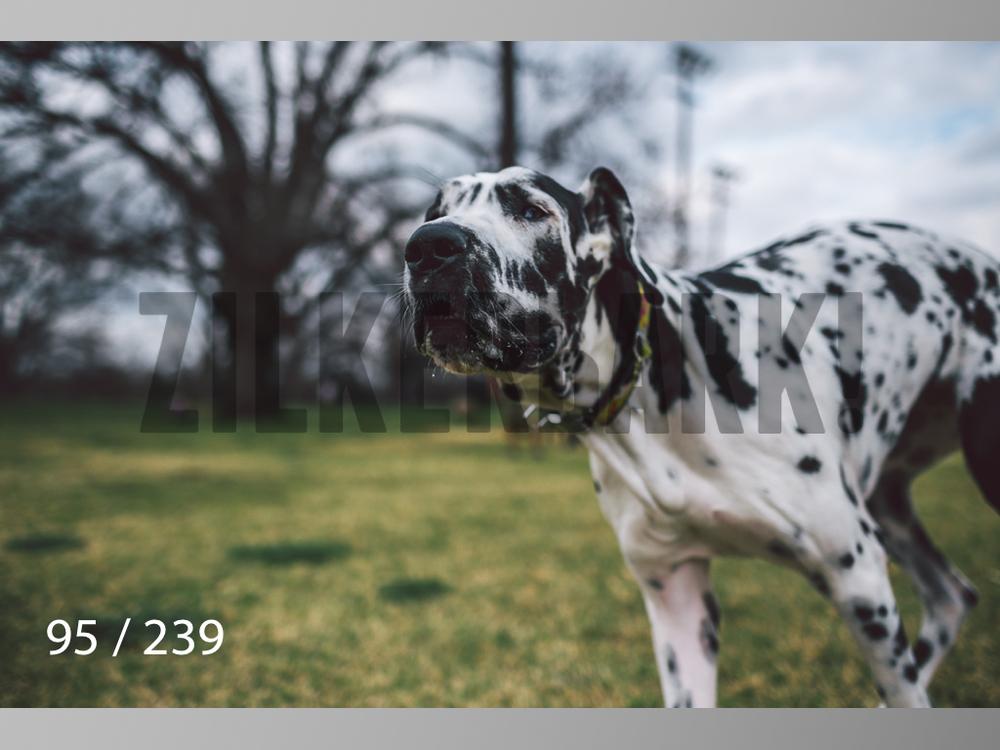 2.20 Dogs-095.jpg