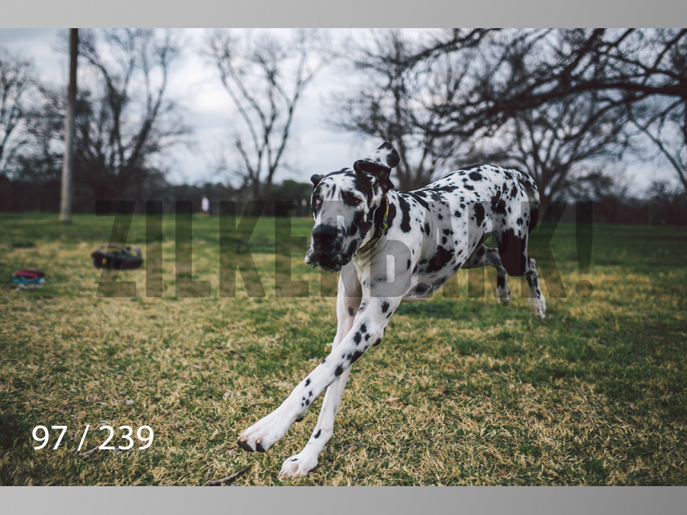 2.20 Dogs-097.jpg