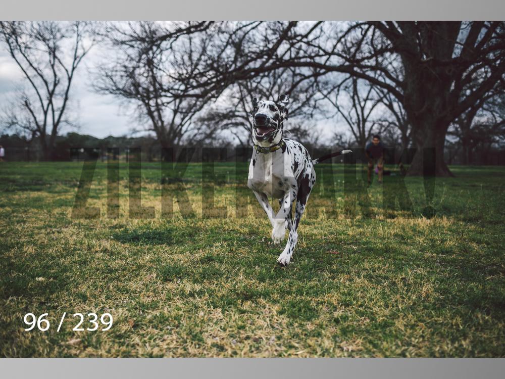 2.20 Dogs-096.jpg