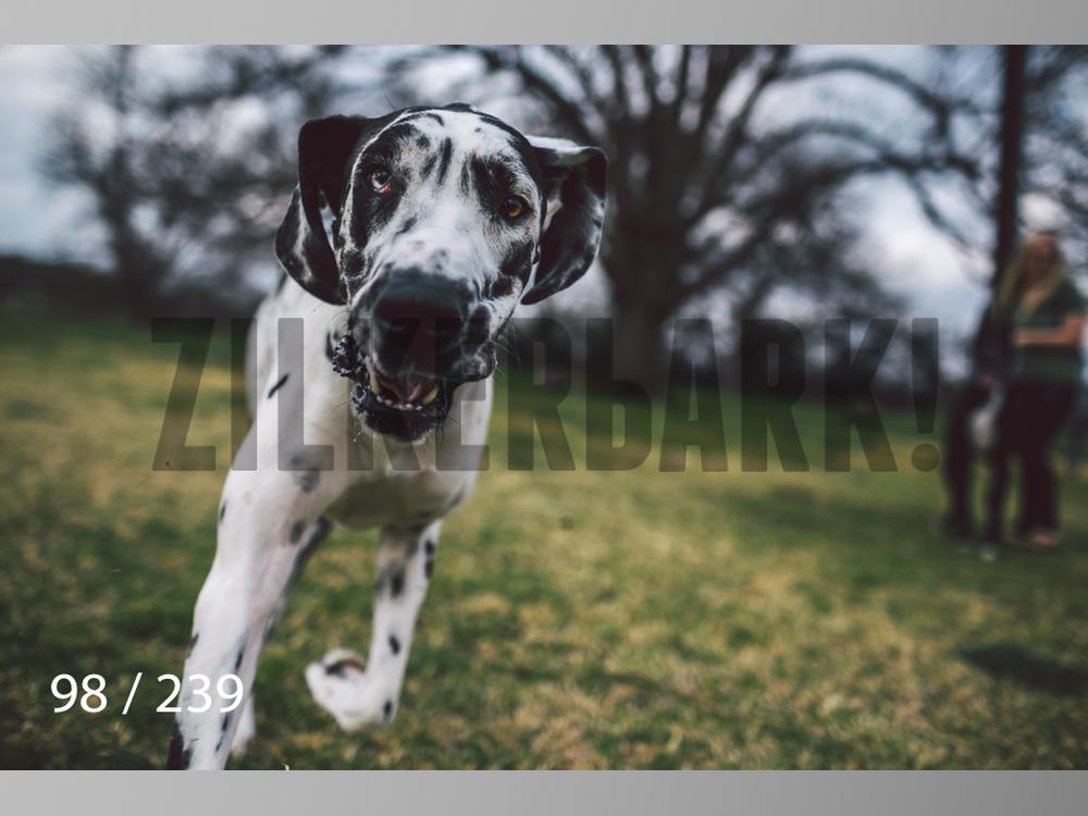 2.20 Dogs-098.jpg