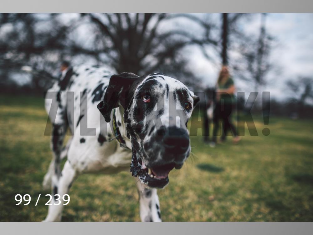 2.20 Dogs-099.jpg