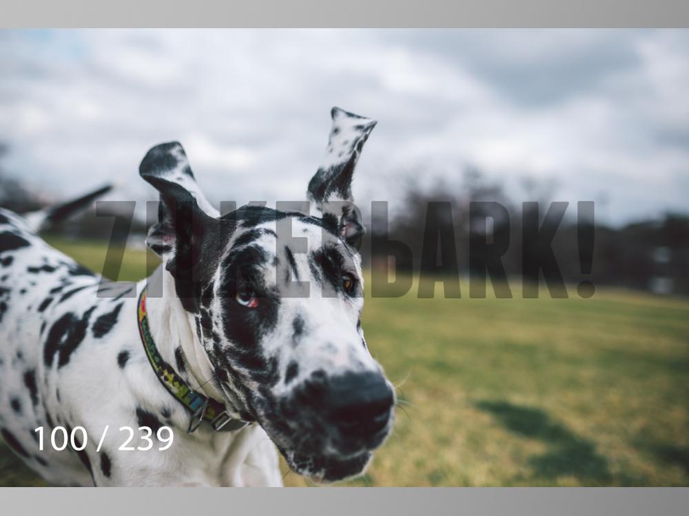 2.20 Dogs-100.jpg
