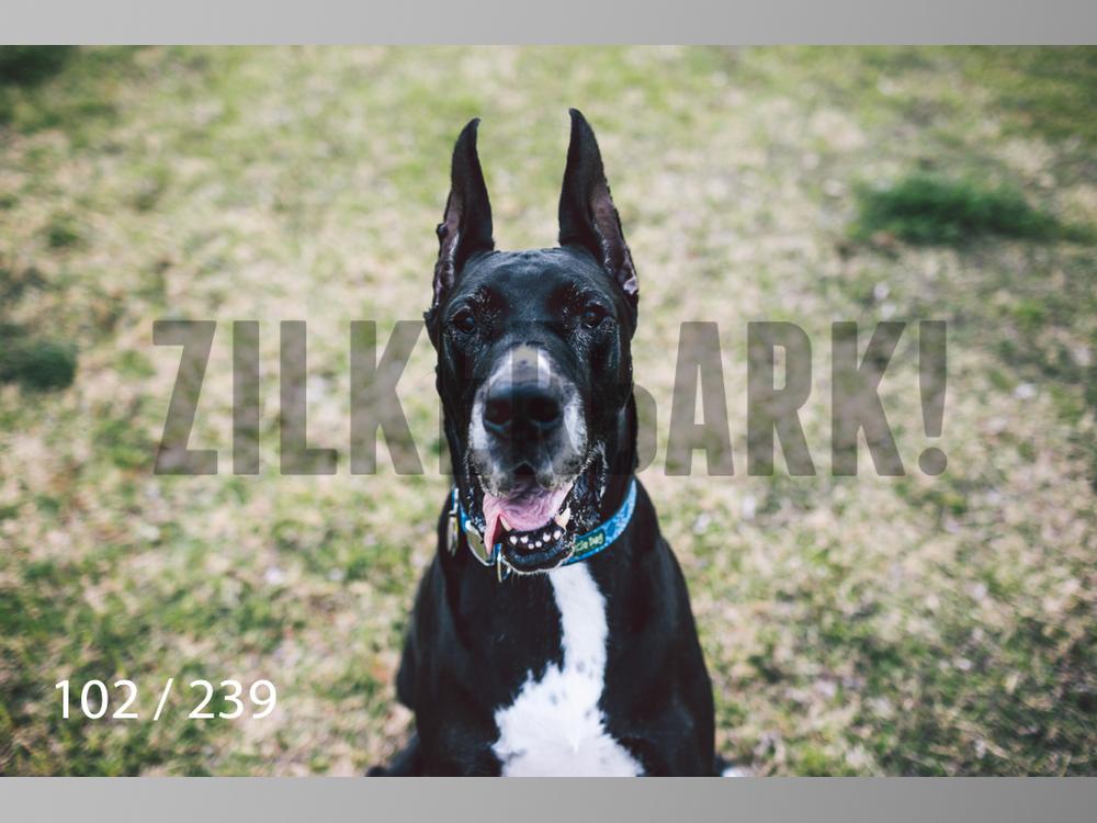 2.20 Dogs-102.jpg