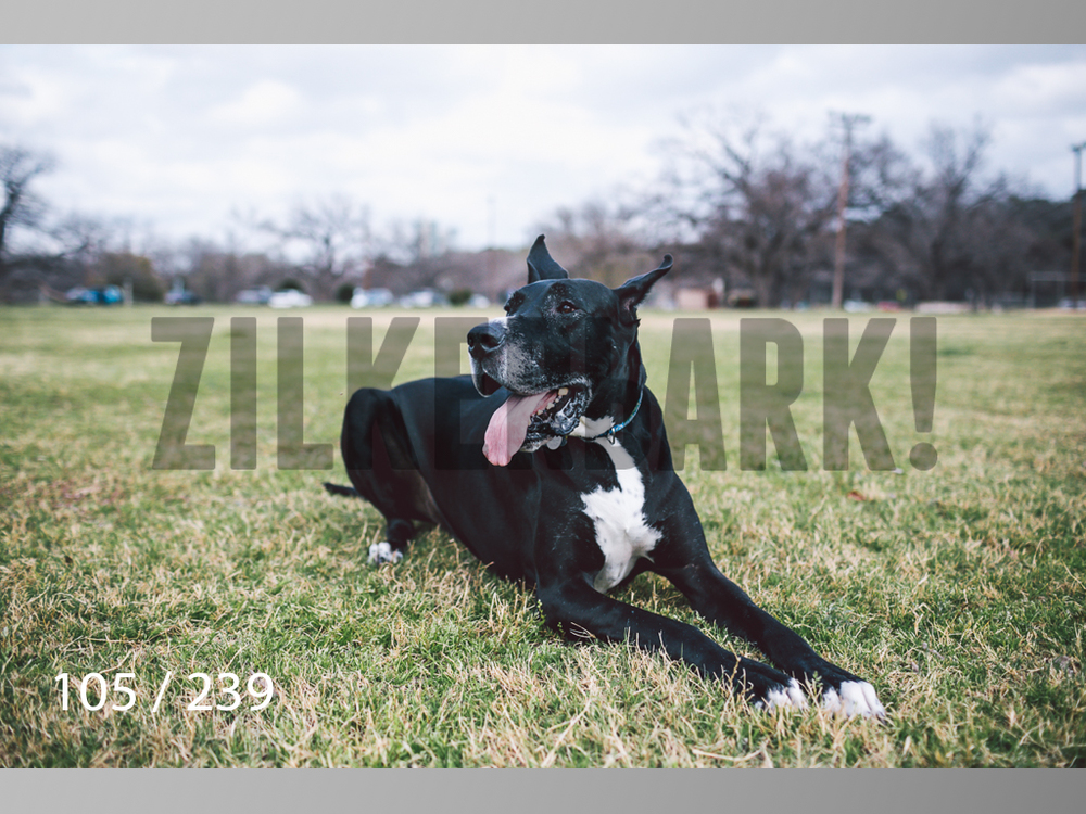 2.20 Dogs-105.jpg