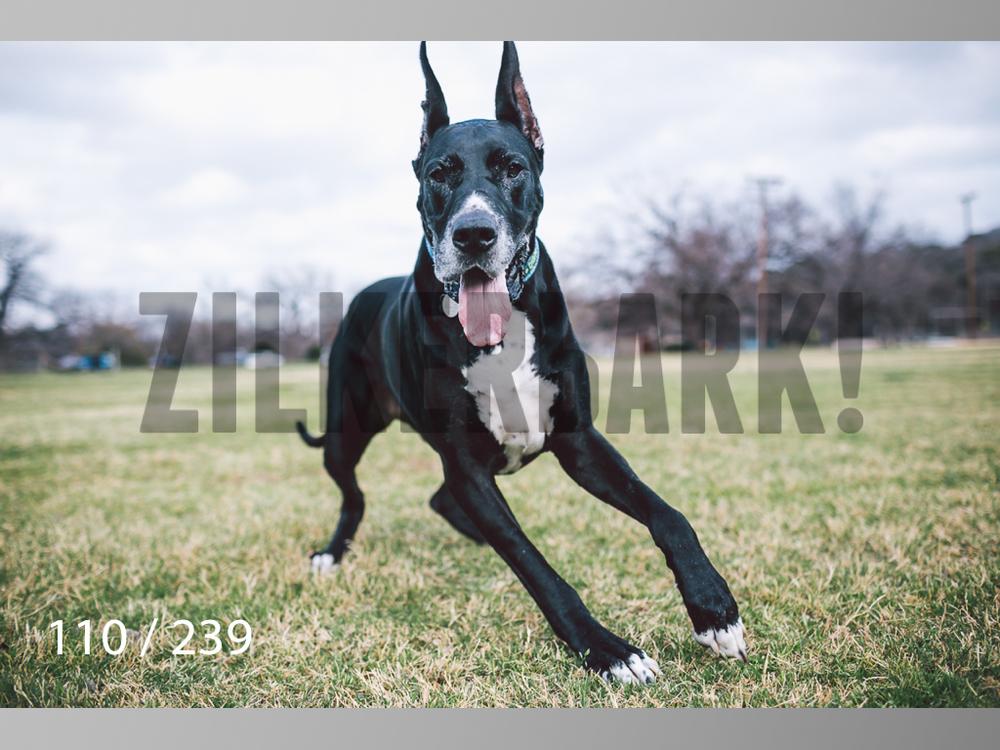 2.20 Dogs-110.jpg