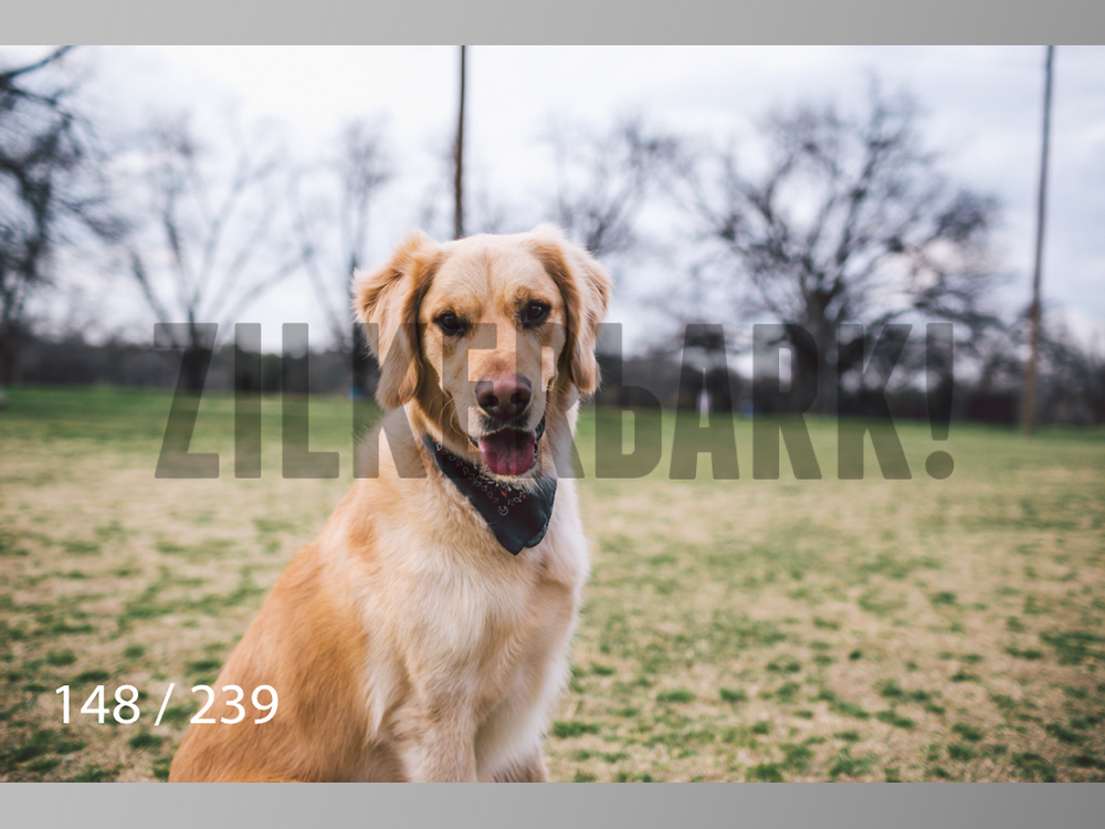 2.20 Dogs-148.jpg
