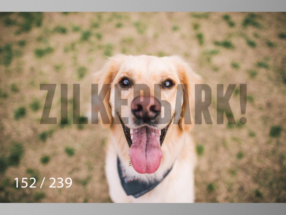 2.20 Dogs-152.jpg