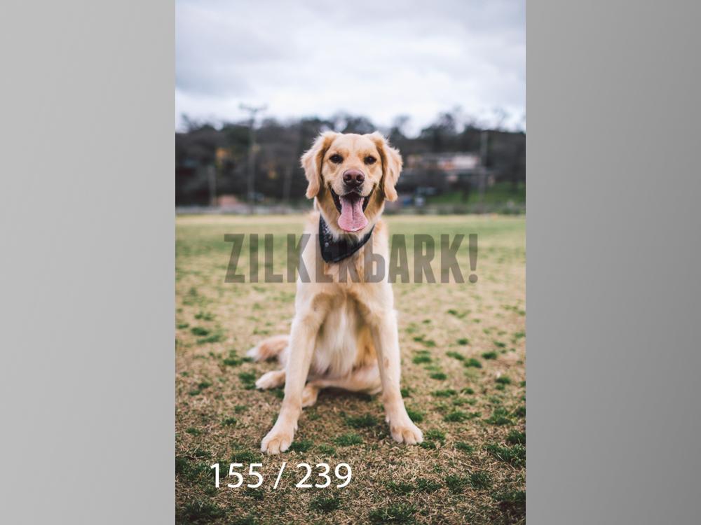 2.20 Dogs-155.jpg