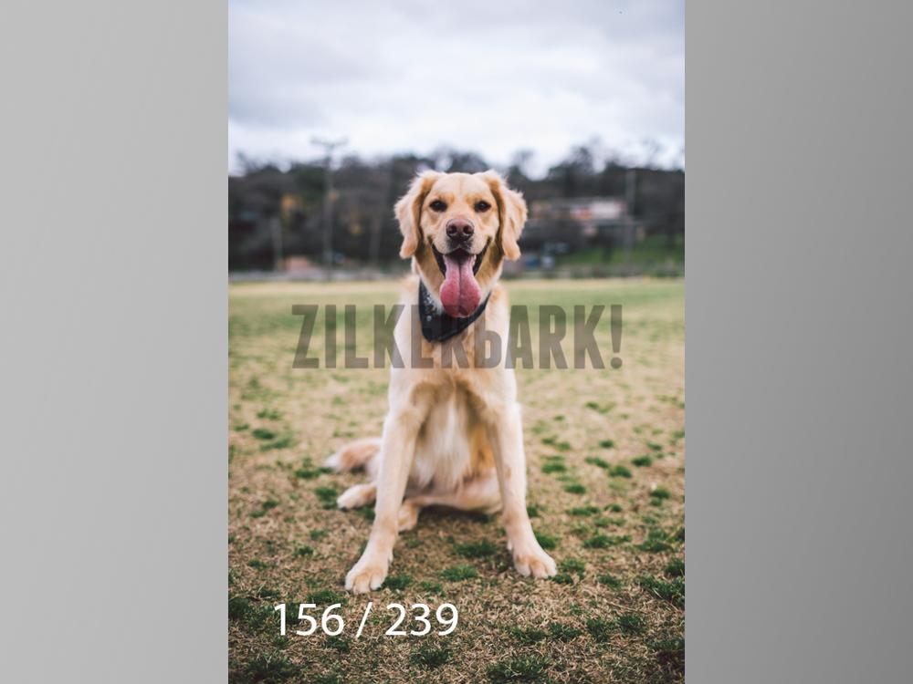 2.20 Dogs-156.jpg