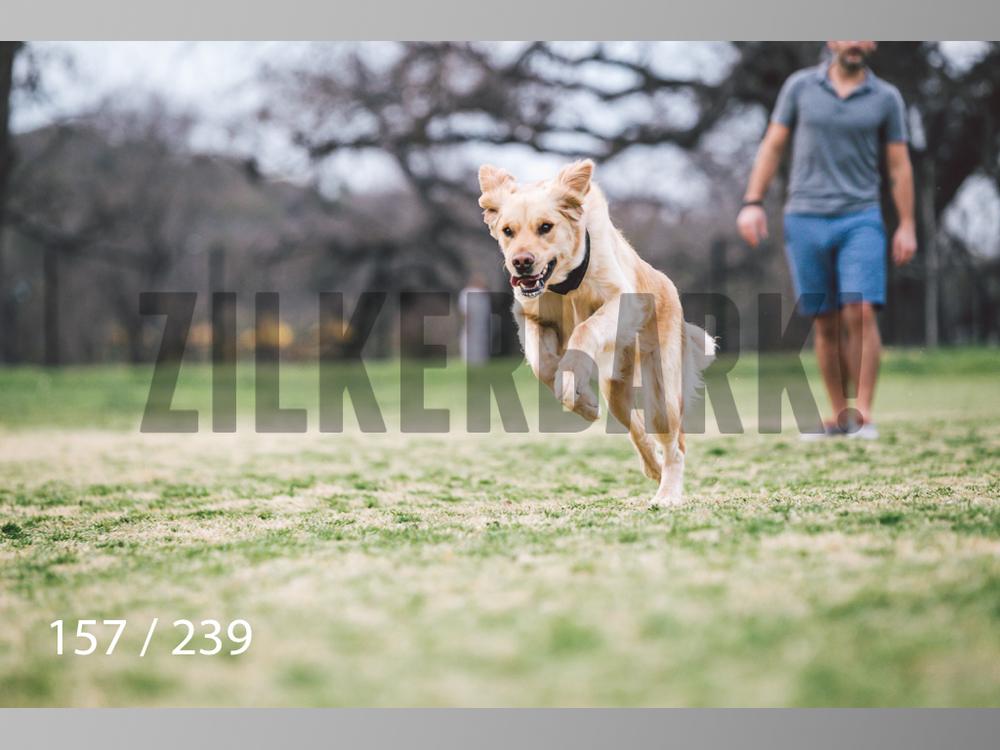 2.20 Dogs-157.jpg