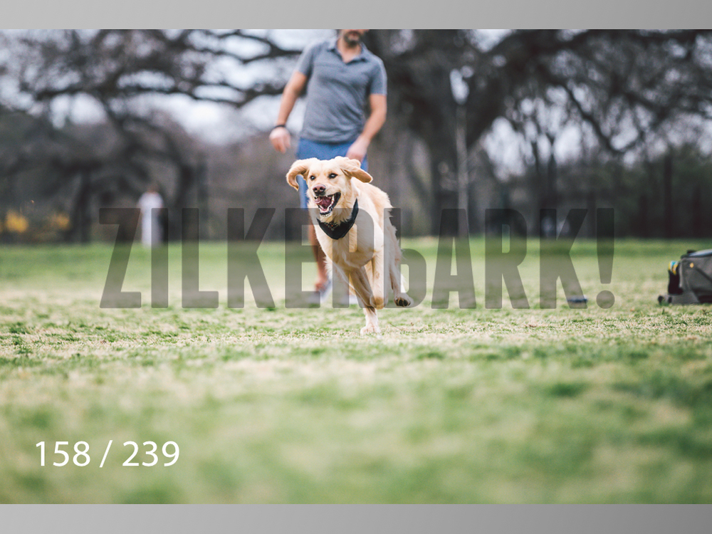 2.20 Dogs-158.jpg