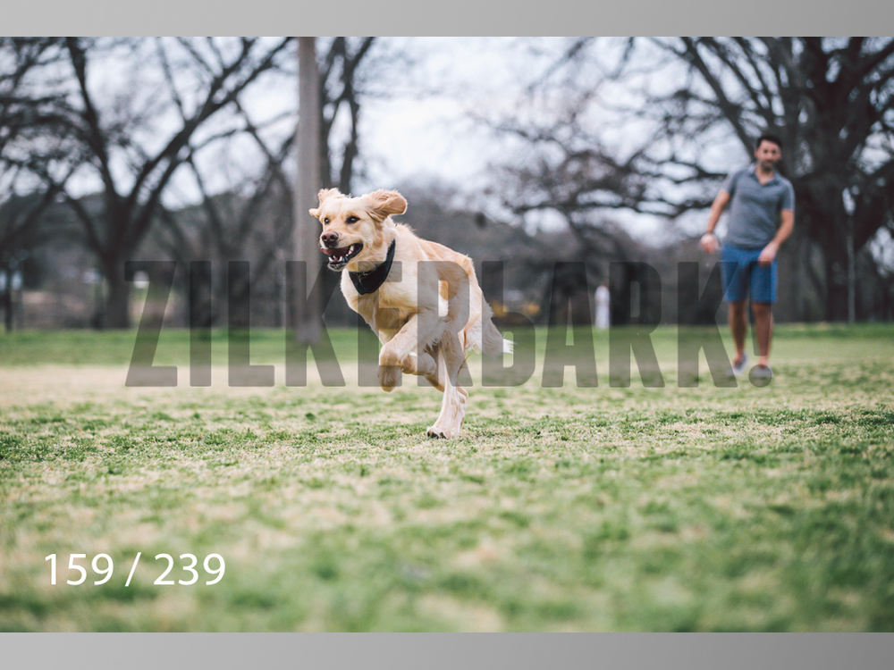 2.20 Dogs-159.jpg